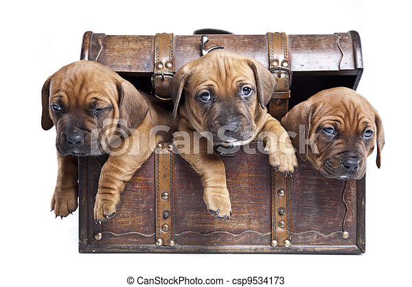doggy, heureux - csp9534173