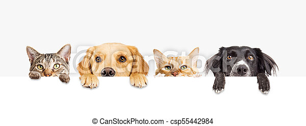 Dogs And Cats Peeking Over Web Banner Row Of The Tops Of Heads Of Cats And Dogs With Paws Up Peeking Over A Blank White