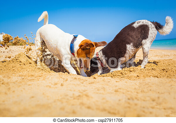dogs digging a hole - csp27911705