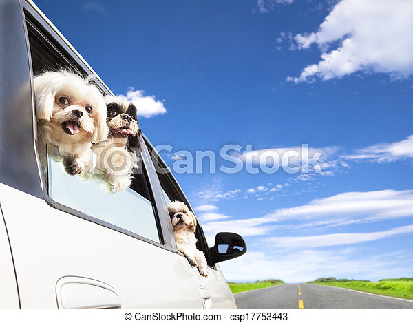 dog's family traveling in the car - csp17753443