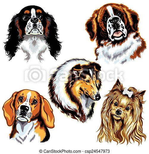 dogs heads - csp24547973