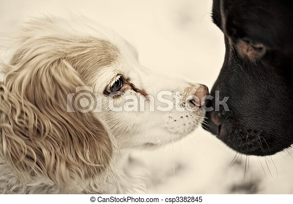dogs kissing - csp3382845