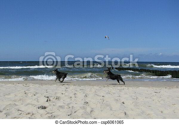 dogs on the beach - csp6061065
