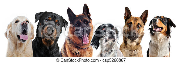dogs - csp5260867