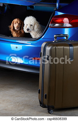 Dogs sitting in car trunk - csp46608399