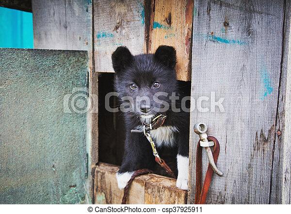 dogs., unterstand, junger hund, wohnungslose - csp37925911