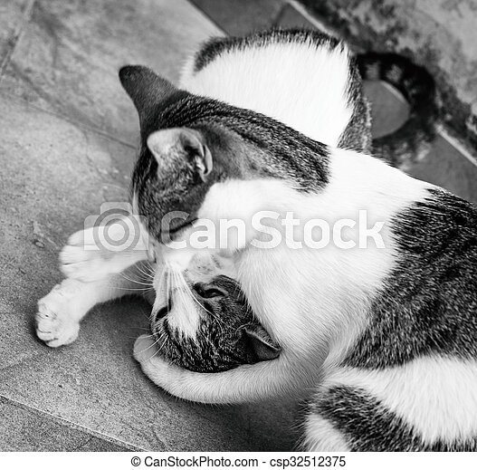 dois, luta, ou, gatos, rua., tocando - csp32512375