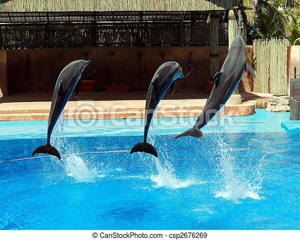 dolphin jump - csp2676269