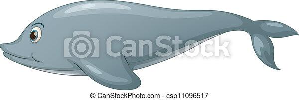 Dolphin on white - csp11096517