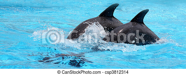 Dolphins In Blue Water - csp3812314