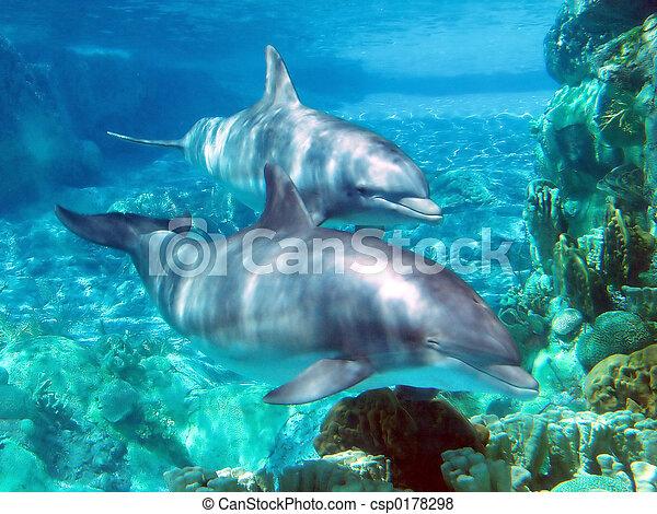 Dolphins - csp0178298