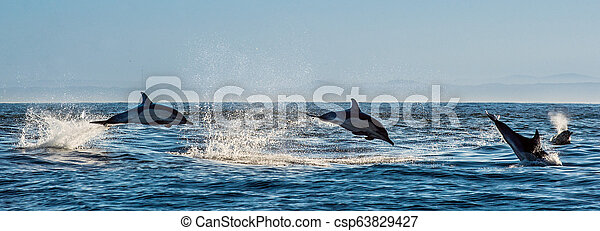 Dolphins swim and jumping out of the water. - csp63829427