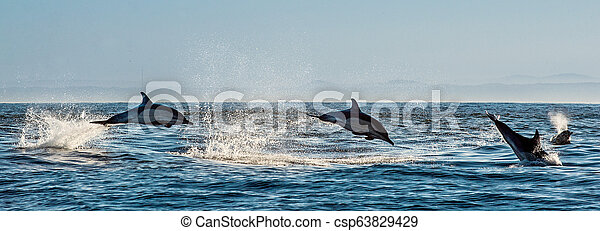 Dolphins swim and jumping out of the water. - csp63829429