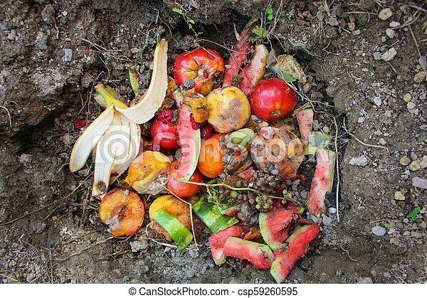Domestic waste for compost from fruits and vegetables in garden. - csp59260595