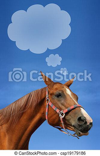Don horse - csp19179186