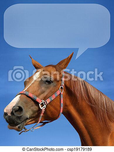 Don horse - csp19179189