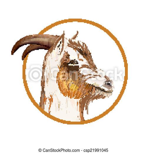 Donkey head. - csp21991045