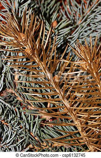 Una rama de pino de oro - csp6132745