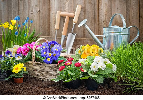 dosadzenie, kwiaty, ogrodnik - csp18767465