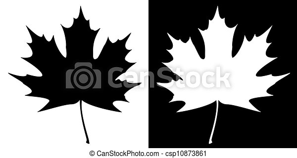 Double Maple Leaf Silhouette - csp10873861