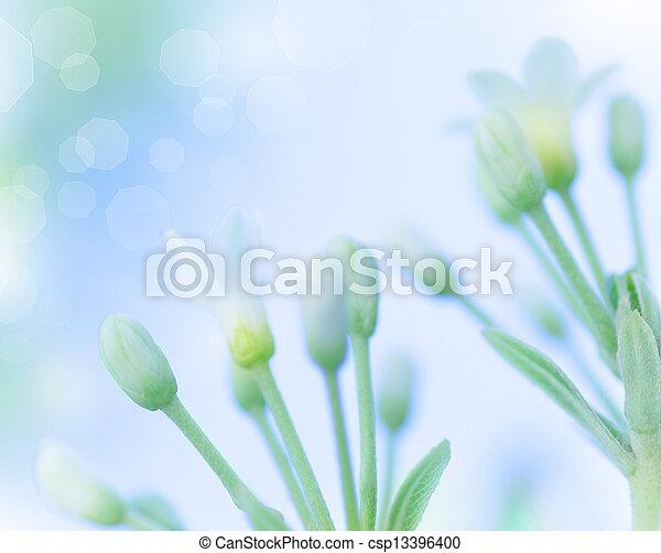 doux, fleurs, printemps - csp13396400