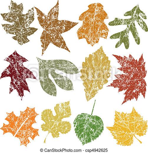 douze, feuilles, grunge - csp4942625