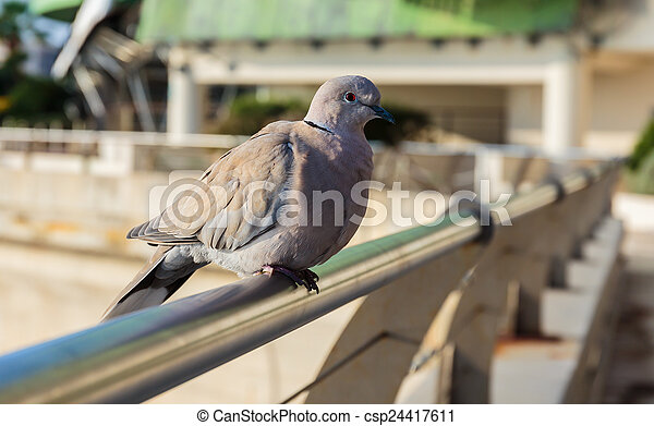 dove on the fence - csp24417611
