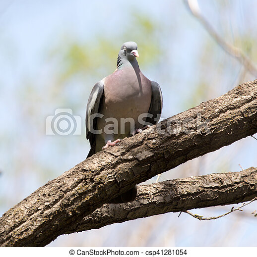 dove on the tree in nature - csp41281054