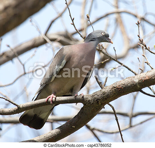 dove on the tree in nature - csp43786052