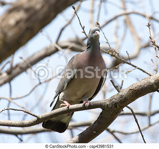 dove on the tree in nature - csp43981531