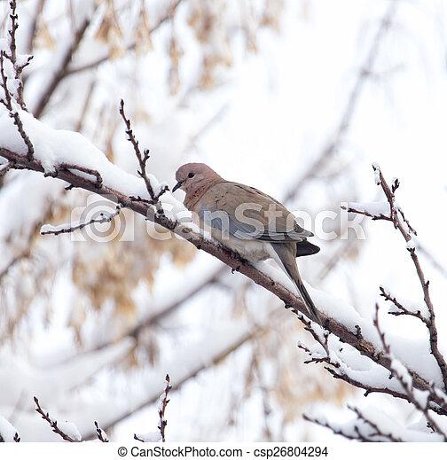 dove on the tree in winter - csp26804294