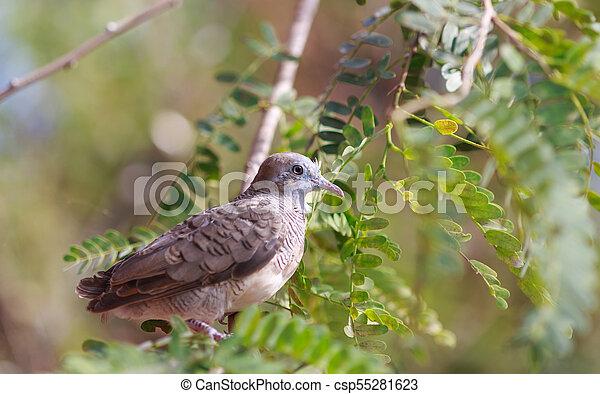 Dove on the tree - csp55281623