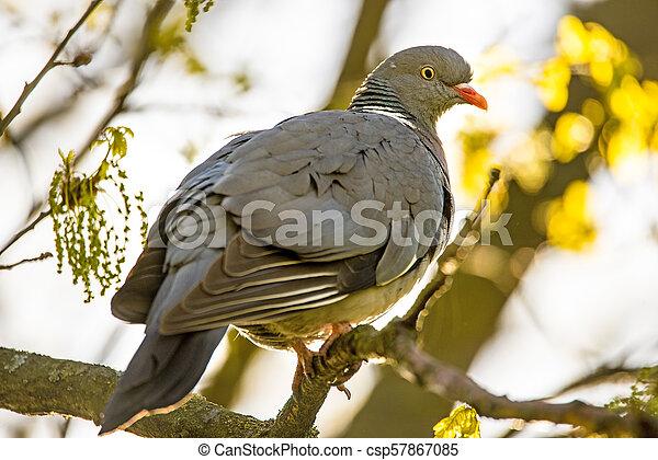 dove sitting on a tree - csp57867085