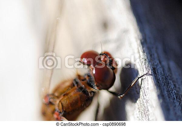 Dragonfly Eye Detail - csp0890698