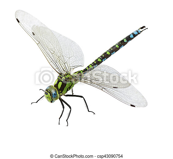 dragonfly isolated - csp43090754
