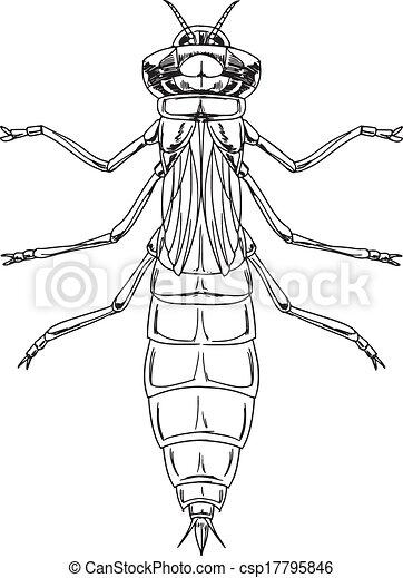 Dragonfly nymph - csp17795846
