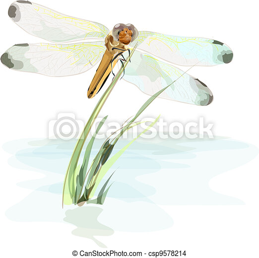 Dragonfly on a pond. Watercolor imitation. - csp9578214