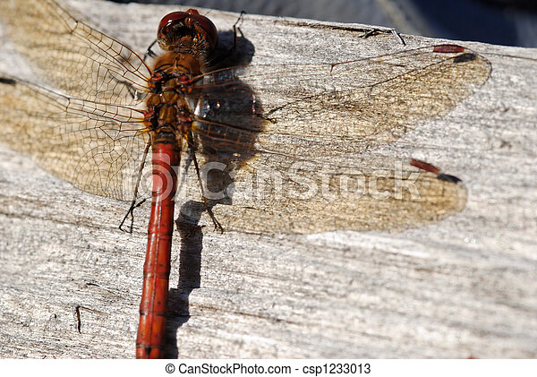 Dragonfly on Wood  - csp1233013