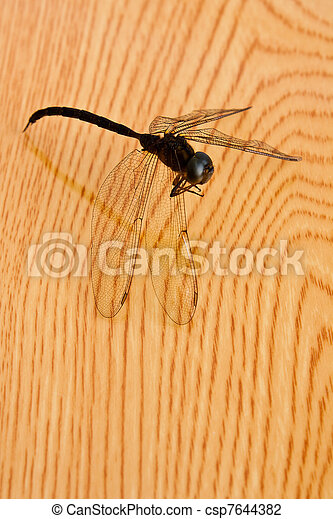 dragonfly on wood table - csp7644382