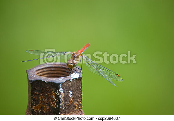 dragonfly - csp2694687