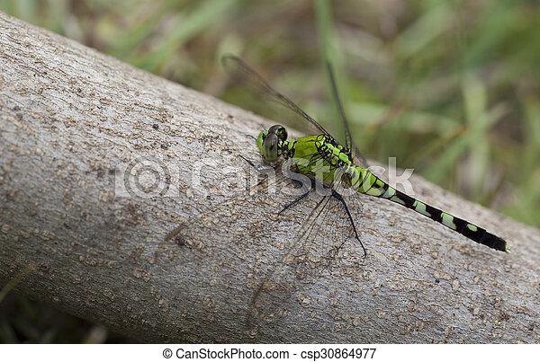 Dragonfly - csp30864977