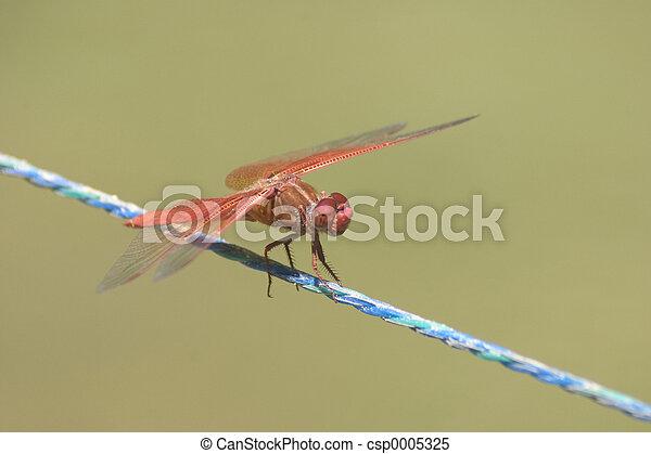 Dragonfly - csp0005325