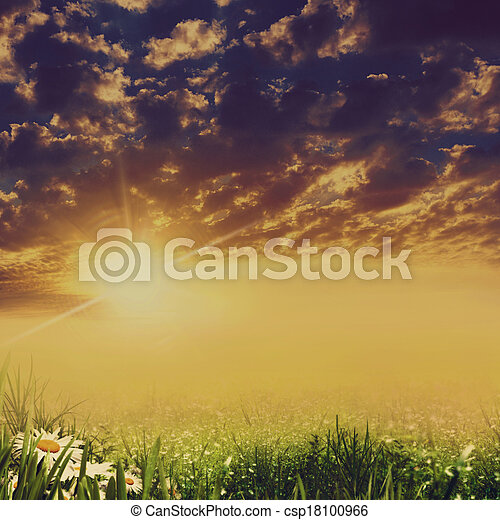 Dramatic landscape with beauty daisy flowers - csp18100966
