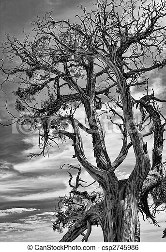 Dramatic Picture of a Dead Tree. - csp2745986