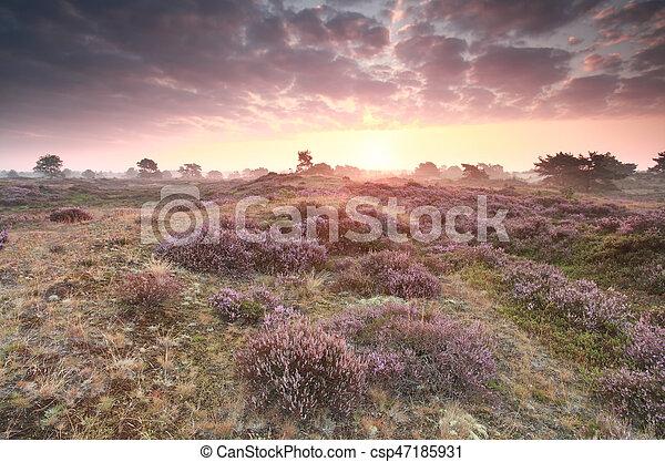 dramatic purple sunrise over heathland dramatic purple stock rh canstockphoto co uk Easter Sunrise Clip Art Beach Clip Art