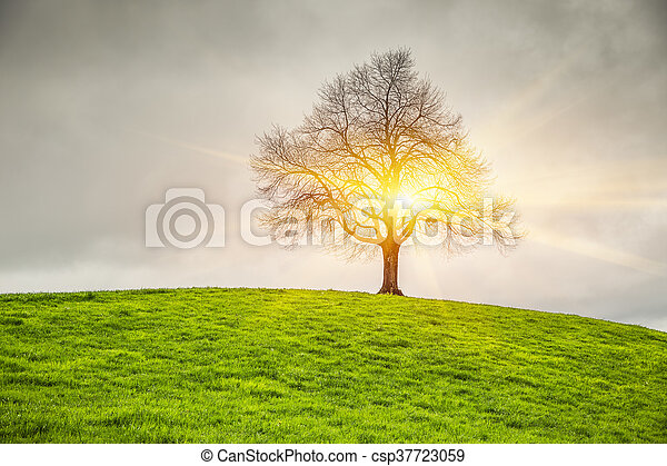 Dramatic sky and sunsrise over old lonely tree - csp37723059