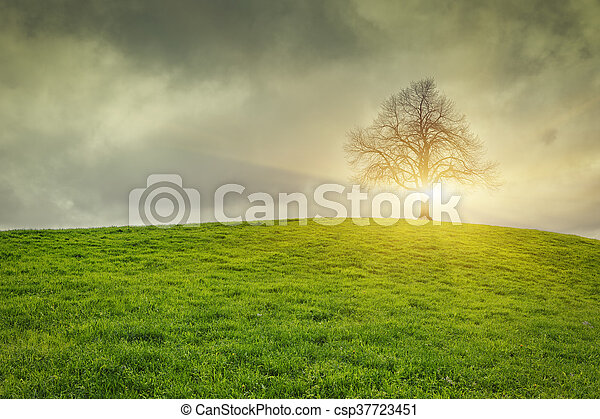 Dramatic sky and sunsrise over old lonely tree - csp37723451