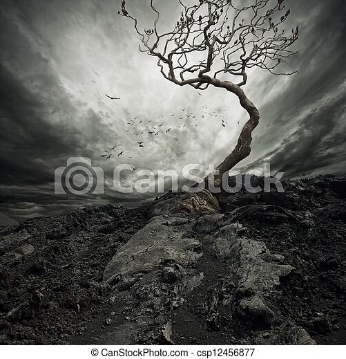 Dramatic sky over old lonely tree. - csp12456877
