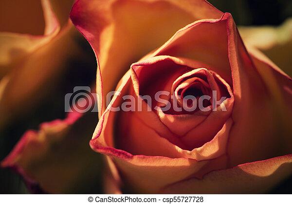 dream detail of a pink flower - csp55727728