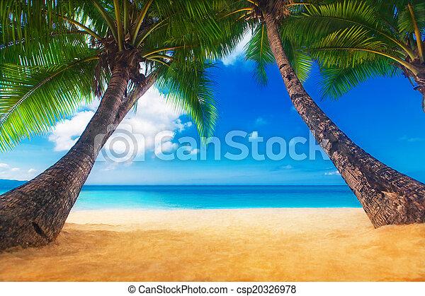 Dream Scene Beautiful Palm Tree Over White Sand Beach Summer N Stock Photo